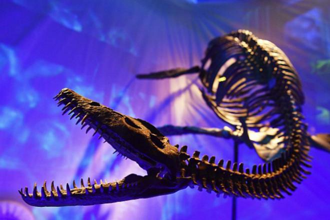 Останки морского чудовища вынесло на побережье Атлантики. Ученые уверяют, что это Лох-Несский ящер