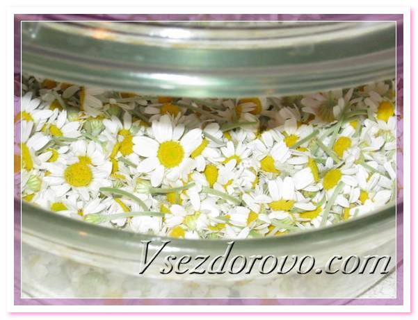 Для приготовления дома гидролата ромашки необходимо собрать полностью раскрытые цветы