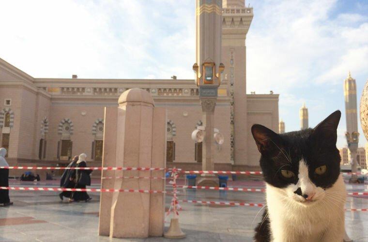 Саудовская Аравия: выгуливать кошек и собак в мире, закон, обычай, порядок, факты