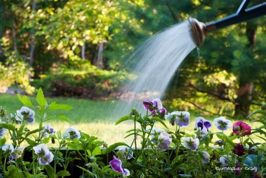 Календарь-шпаргалка садовода и огородника на июль