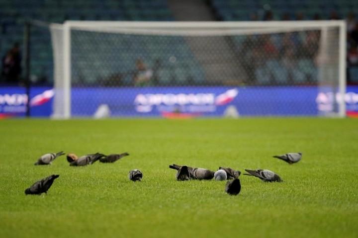 Удачу россиянам в матче Лиги Наций с командой Турции принесли голуби