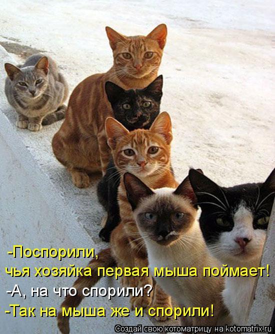 Новые котоматрицы с классным задором (30 фото)