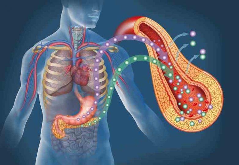 Продукты, которые вредят поджелудочной железе