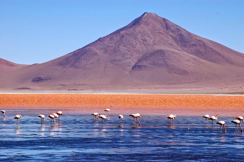 LagunaColorada09 Кровавая лагуна в Боливии