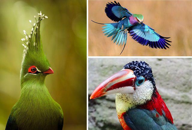 Птицы, сошедшие со страниц сказок птицы, удивительные, красиво