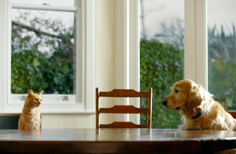 Научит вашего пса вести себя за столом.