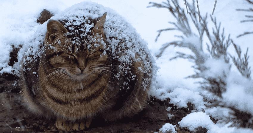 Беременная бродячая кошка за…