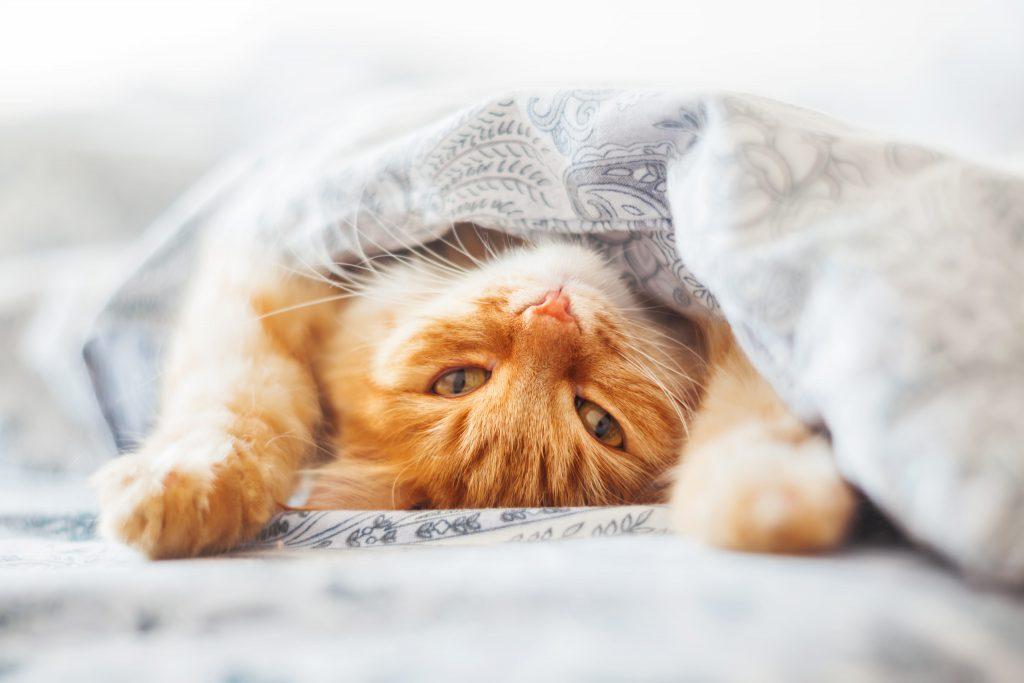 международный день кошек