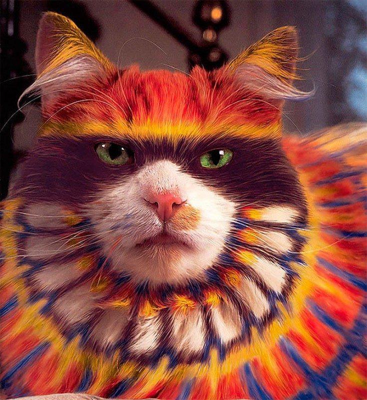 Кэтпейнтинг — это форма искусства или издевательство над животными