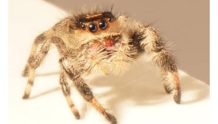 Дрессированный паук поможет …
