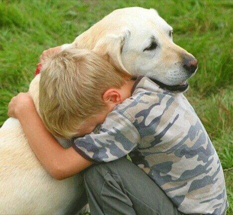 Хозяин этого лабрадора должен был стать взрослый мужчина, но собака выбрала семилетнего мальчика.
