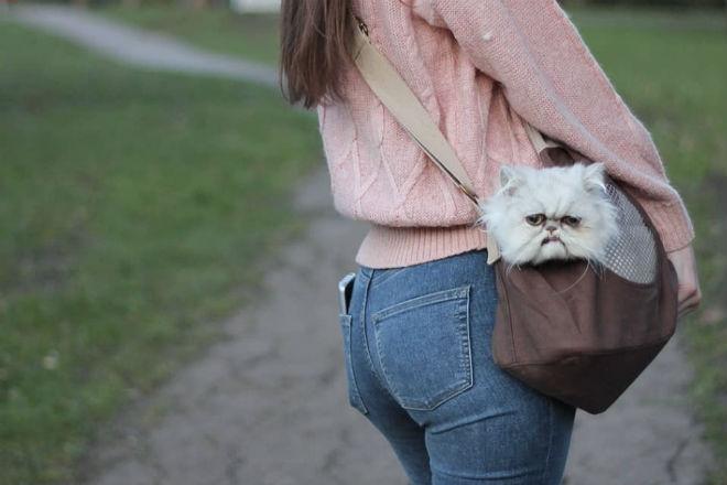 В сети нашли самого страшного кота мира