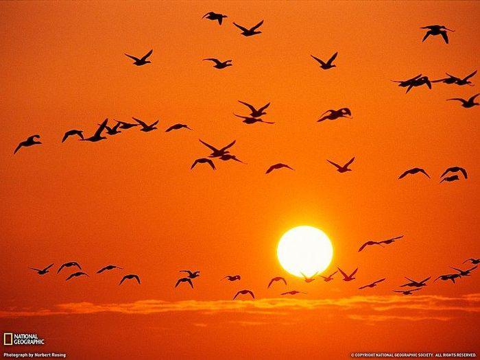 Оранжевое солнце, оранжевое небо, оранжевые тыквы, оранжевый салют (20 фото)
