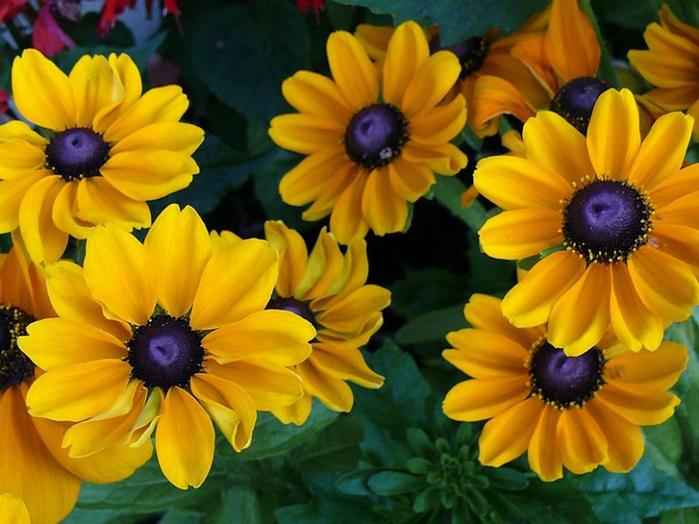 цвет, осени 20 (700x524, 416Kb)