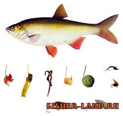 на какие приманки рыба