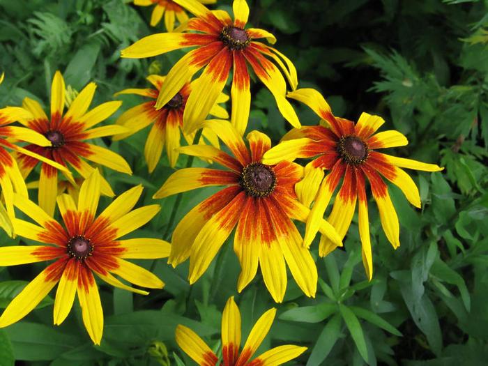цветы осени 16 (700x525, 498Kb)