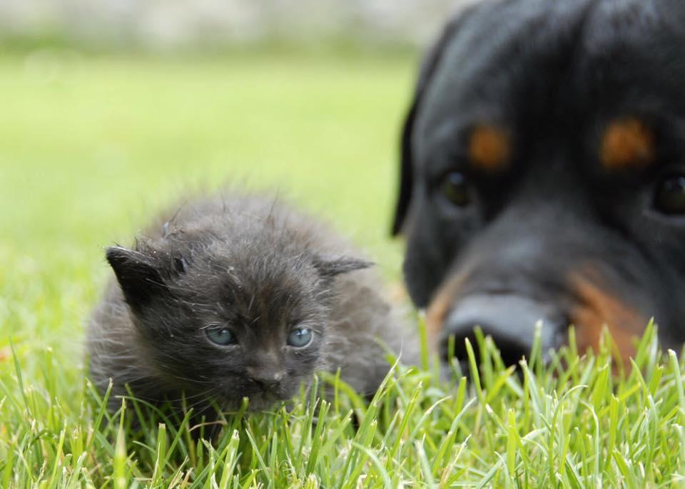 Про собачьих «яжотцов»