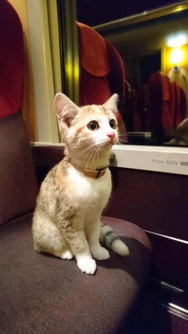 Этот отважный потерявшийся котёнок самостоятельно сел на поезд, чтобы вернуться домой