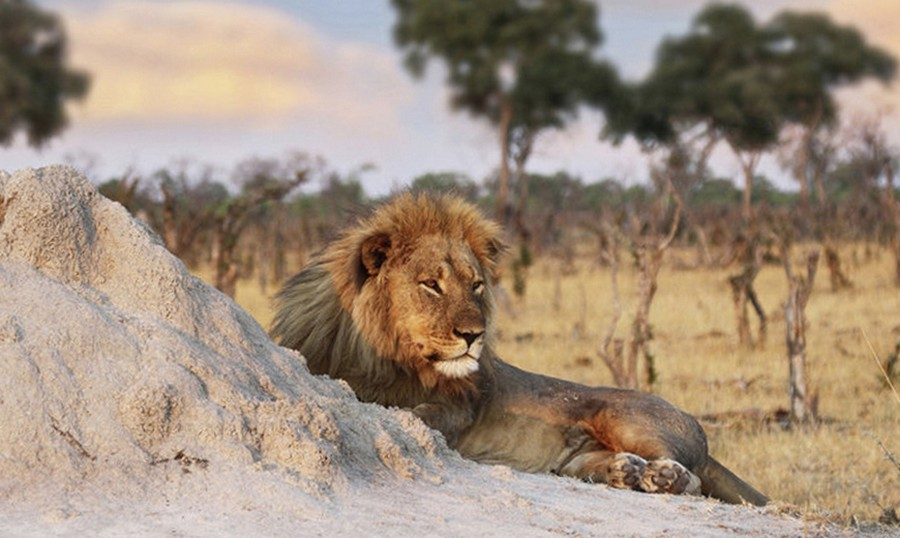 ЮАР — браконьеров за рогами …