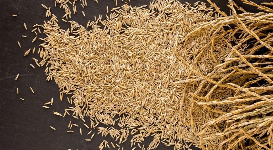 Кернза – родственник пшеницы, сорт пырея среднего