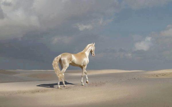 Ахал-Теке: одна из самых красивых лошадей в мире