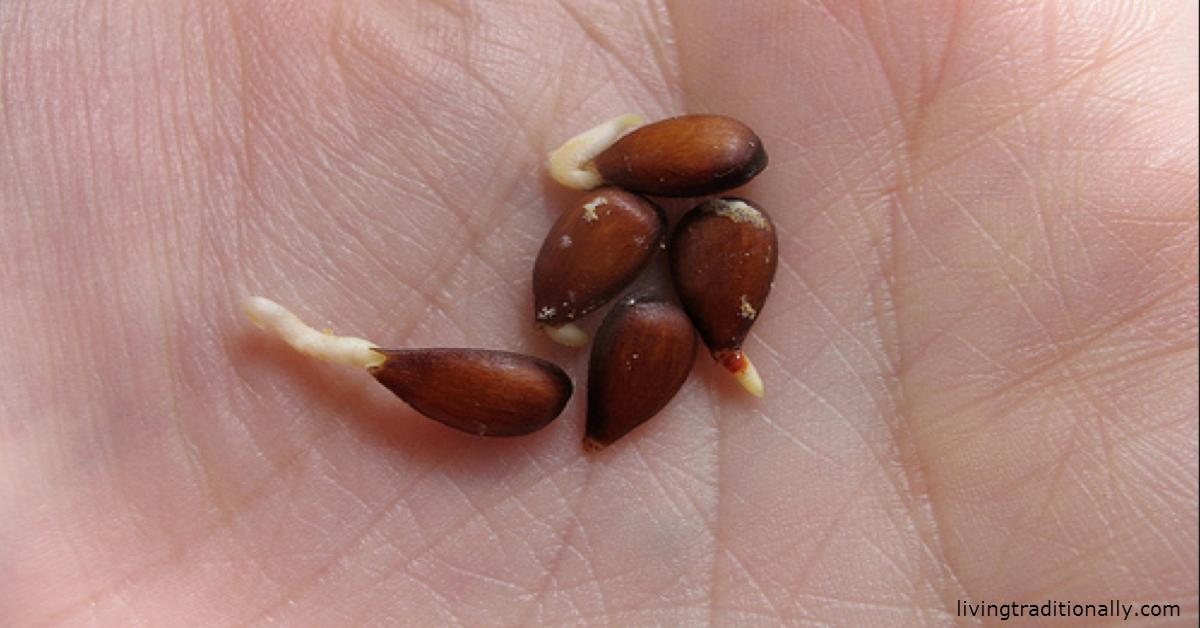 Яблоки, семена, рак: Вот что врачи скрывали от всех нас десятки лет!