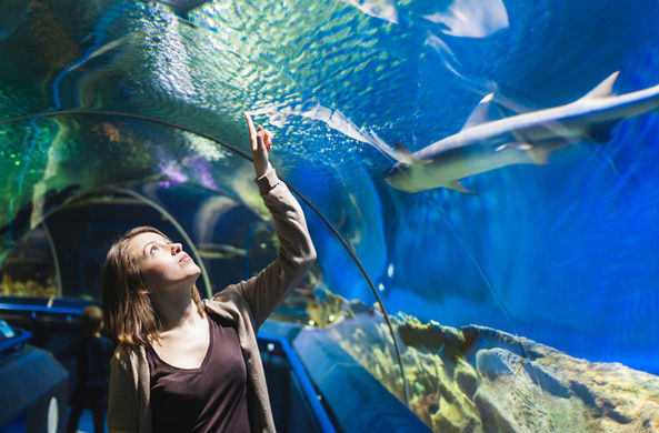 В Техасе украли акулу из океанариума