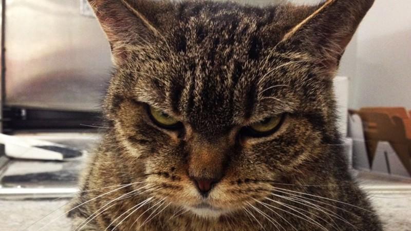 Уборкой дома занималась исключительно моя жена, но этот кот приучил меня к порядку за неделю!
