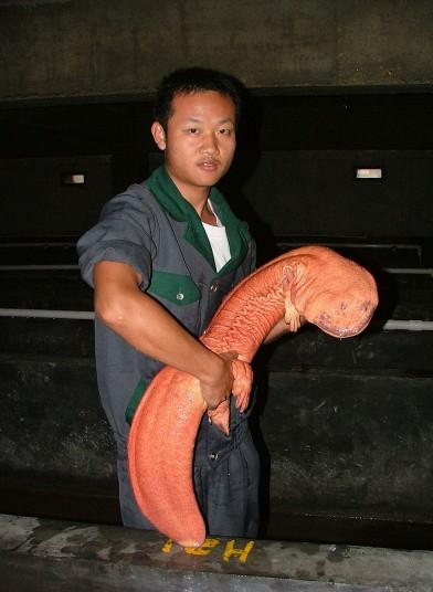гиганты из мира природы 10 На снимках: гиганты из мира природы   самые крупные животные в мире!