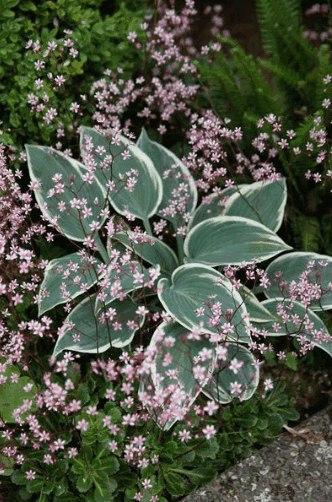 Красивые сочетания растений