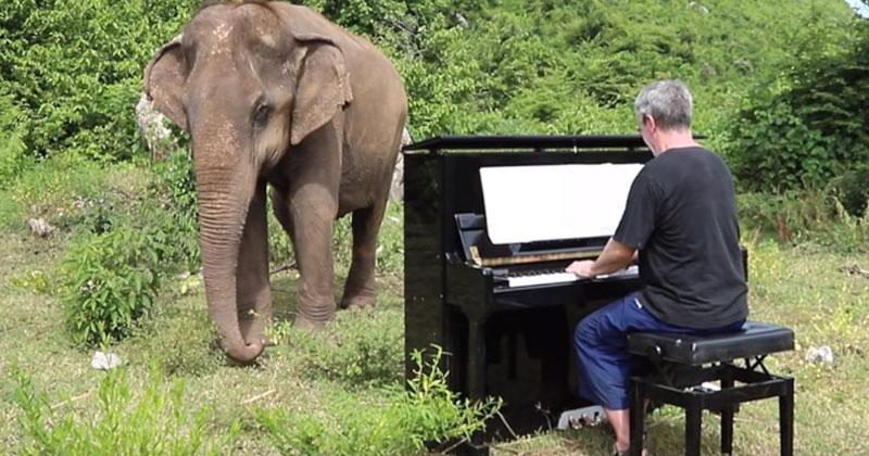 Пианист решил сыграть для слона. История, которая трогает до слез!
