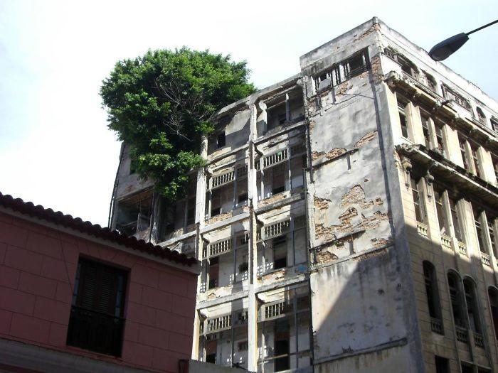 В заброшенном здании дерево, живучесть, жизнь, мир, планета, растительность, фото