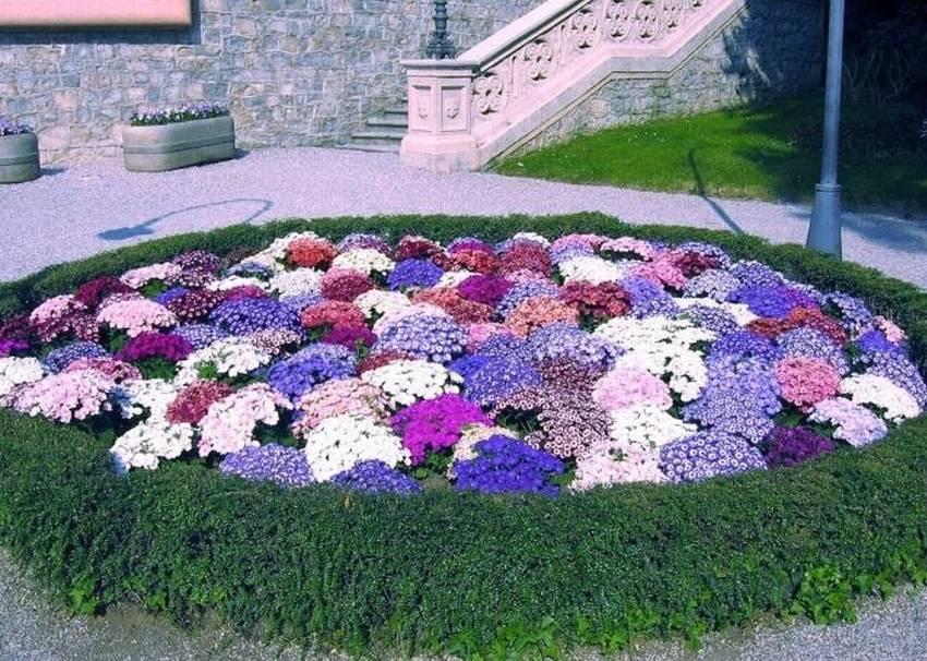 Клумба в виде букета цветов. 12 фото