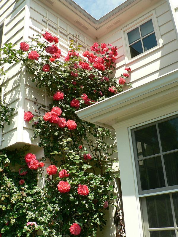 Вся роскошь вьющихся роз на службе красоты и уюта.