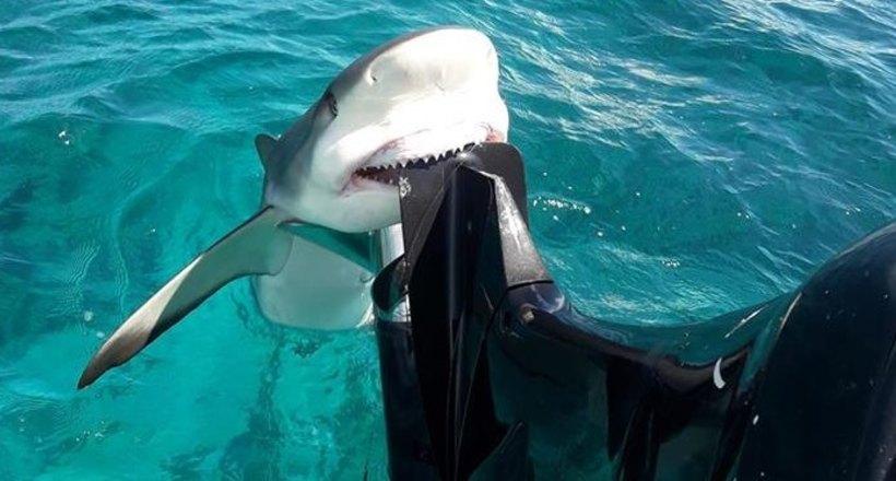 Видео: Акула вцепилась зубам…