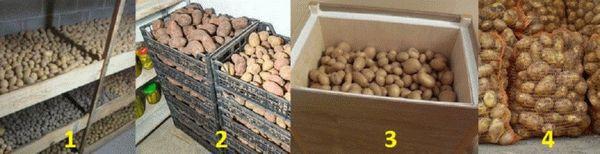Как правильно хранить картошку в квартире или доме?