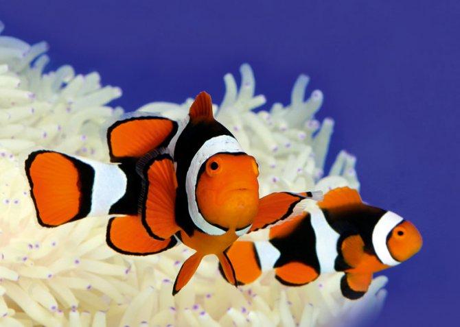 Удивительные способности некоторых рыб