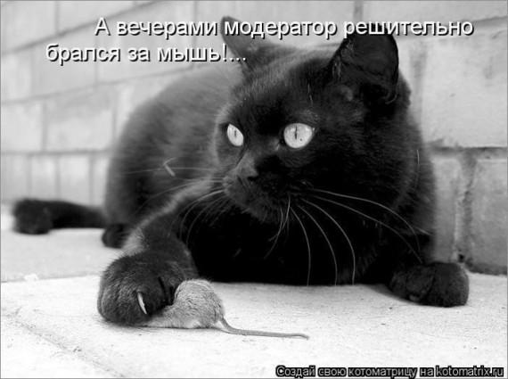1359322303_1359093525_kotomauj (570x425, 55Kb)