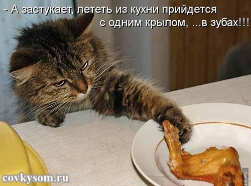 Кулинарный юмор