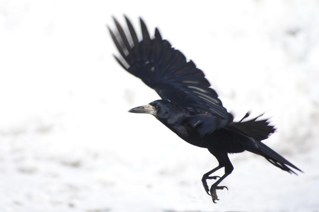 Ты не вейся, чёрный ворон...