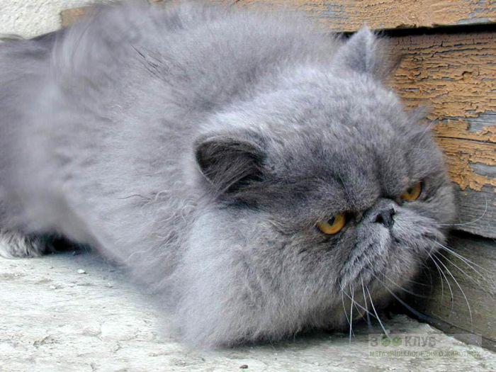 кто тайота имя для котенка понять, какие самые