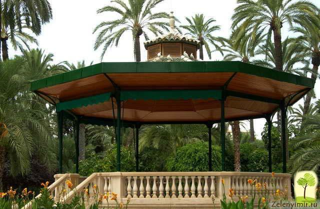 Чарующий пальмовый лес Эльче в Испании - 5