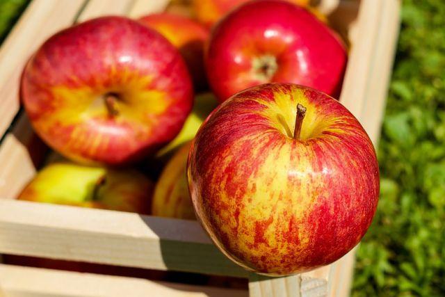 В чем польза яблок
