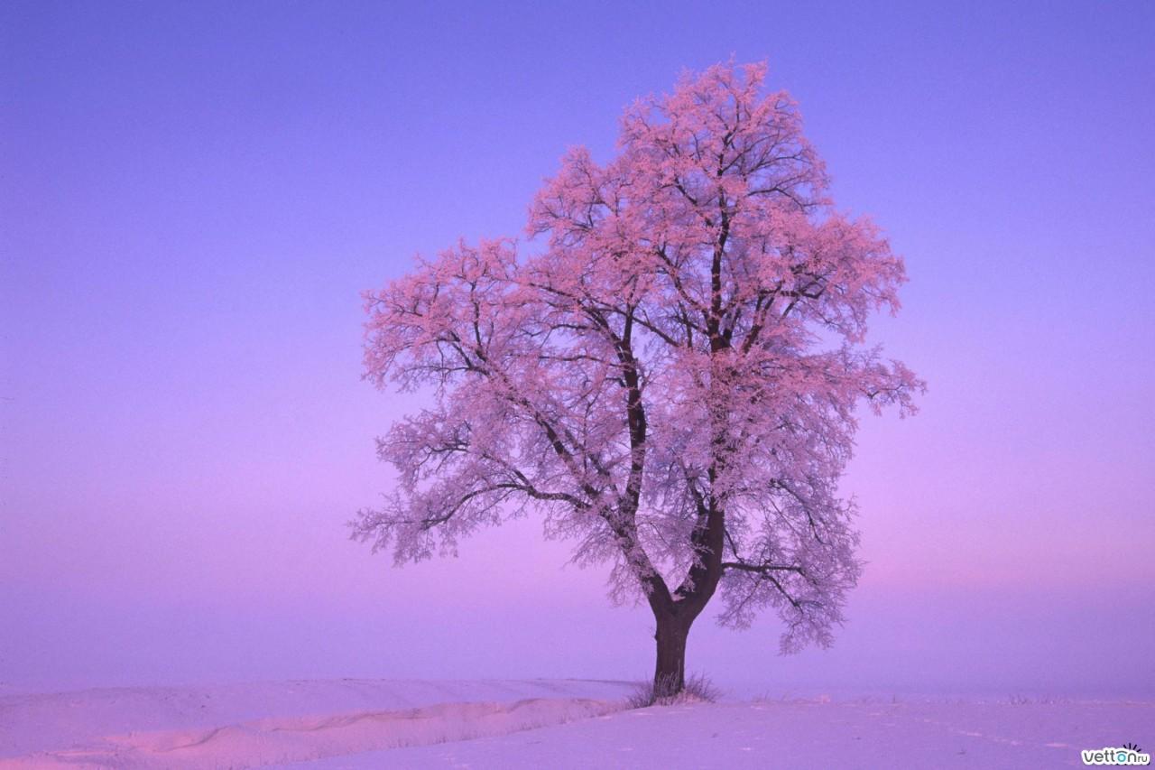 Скачать обои Липа в снегу, Бавария, Германия (1024 x 600). Обои на рабочий стол, фотографии