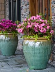 Уход за контейнерными растениями в летний период