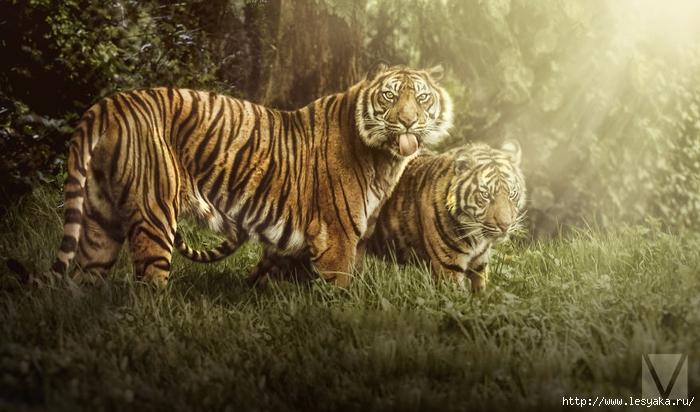 КОШКИН ДОМ. Животные с характером