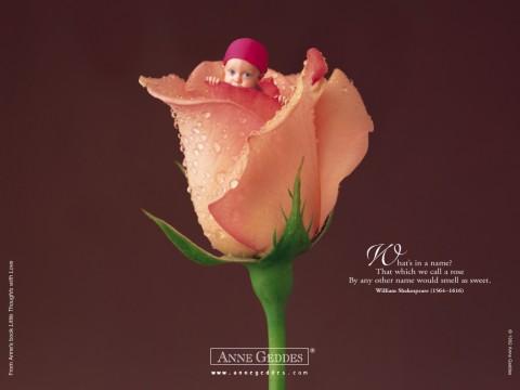 Малыши и розы от знаменитого фотографа ANNE GEDDES!