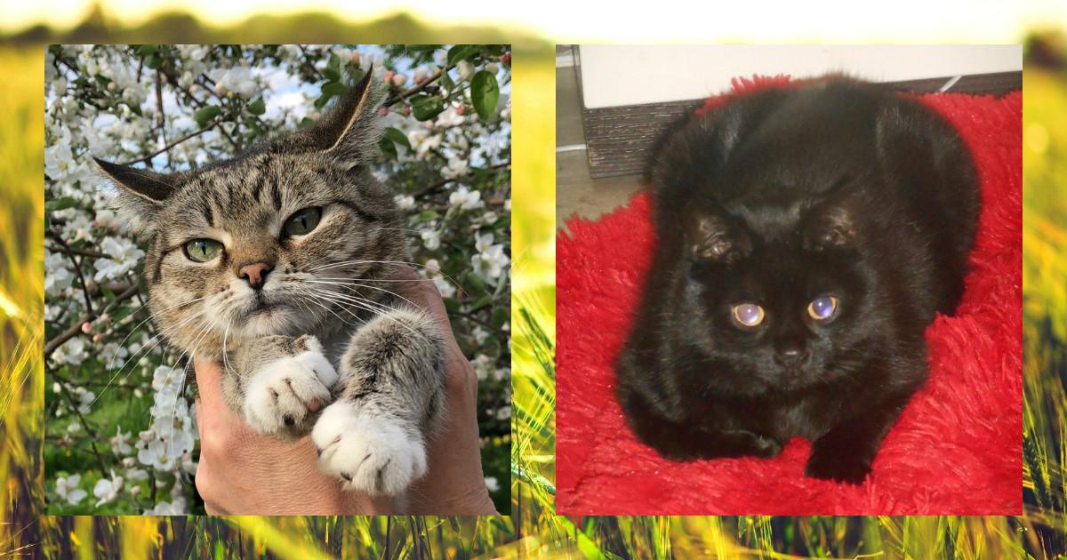 Они хотели быть любимыми… Кошка с чердака и кот из подвала просто ждали своего часа!