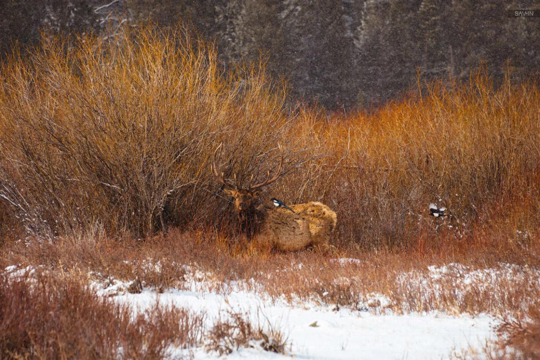 Колорадо. Национальный парк Rocky Mountain