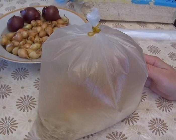 как выращивать лук из семян